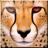 XoftSpySE icon
