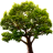 Lake Tree 3D Screensaver and Animated Wallpaper icon